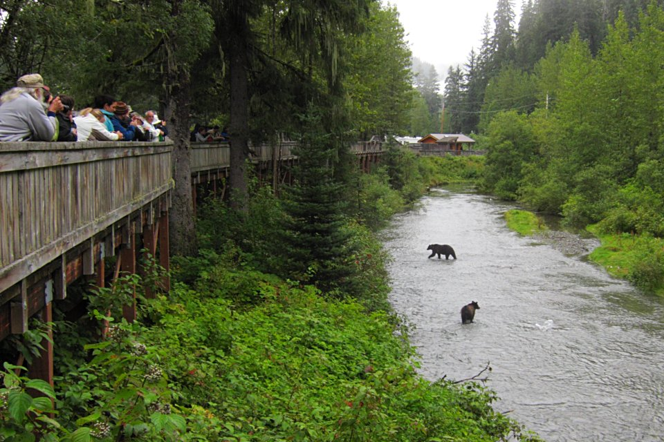 A guide to alaska bear viewing locations for Bear creek fishing