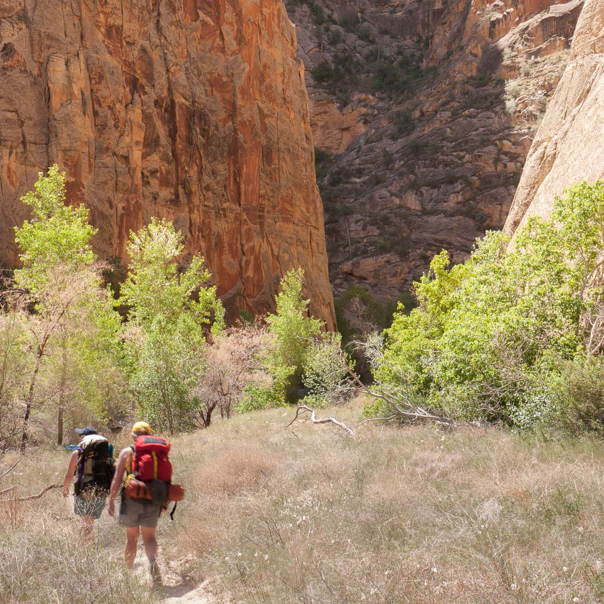 hiking in upper escalante river canyon