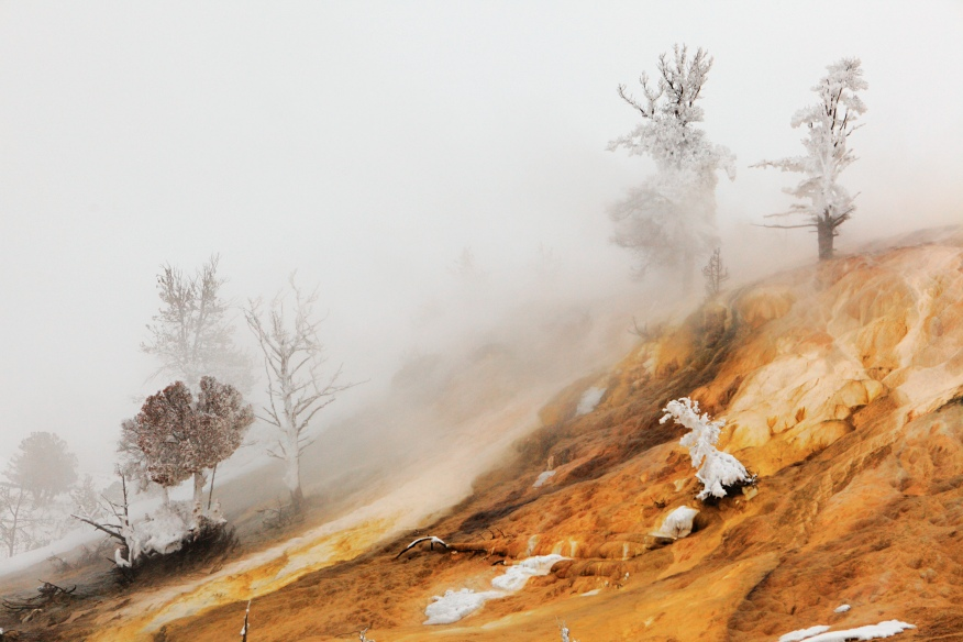 Mammoth hot springs winter